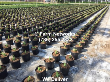 Broward Nursery Plants