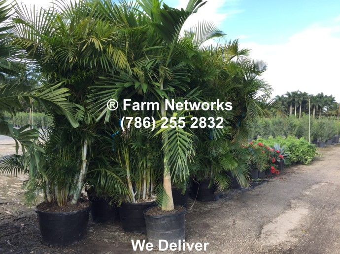 Broward Palm Trees, Growers