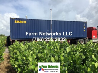South Florida Premier Plants Exporters